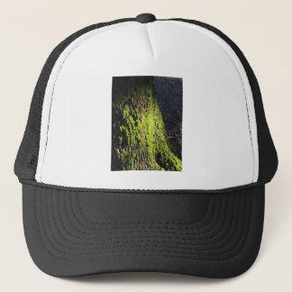 El musgo verde en el detalle de la naturaleza del gorra de camionero