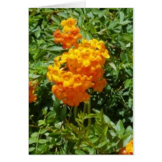 El naranja florece la tarjeta