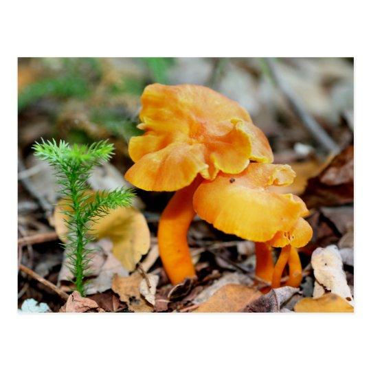 El naranja salvaje prolifera rápidamente postal de