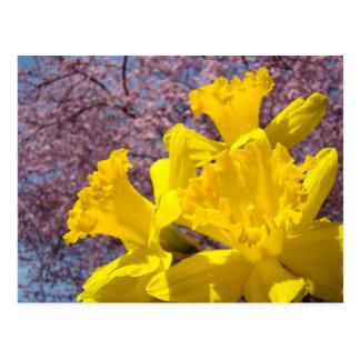 El narciso amarillo florece los flores del árbol d tarjeta postal