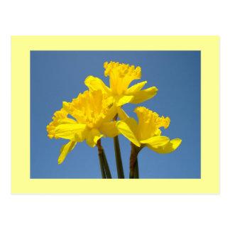 El narciso florece narcisos de la primavera de las tarjetas postales