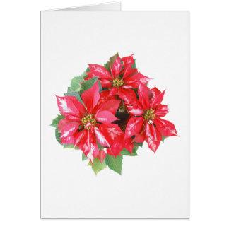 El navidad del Poinsettia protagoniza el png Tarjeta
