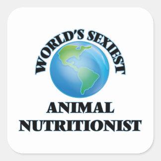 El nutricionista animal más atractivo del mundo calcomanías cuadradases