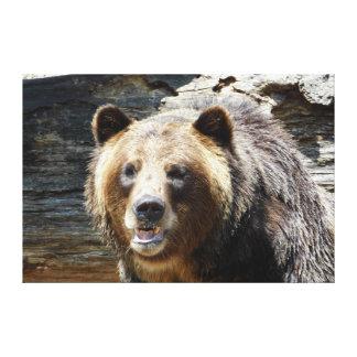 El oso grizzly envolvió la impresión de la lona