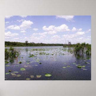 El pantano y el cielo hacen para la belleza natura póster