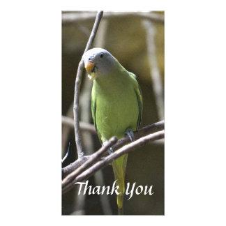 El Parakeet le agradece tarjeta de la foto Tarjetas Con Fotos Personalizadas