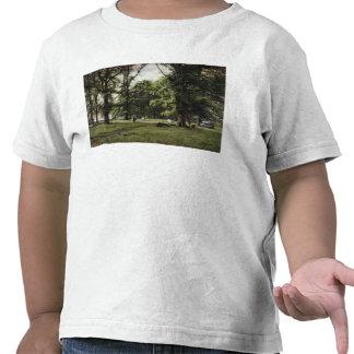 El paseo del olmo camisetas