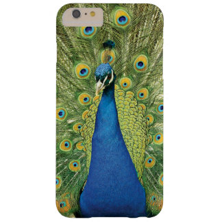El pavo real empluma la caja hermosa del iphone 6 funda barely there iPhone 6 plus
