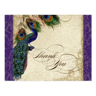 El pavo real y las plumas formales le agradecen postal