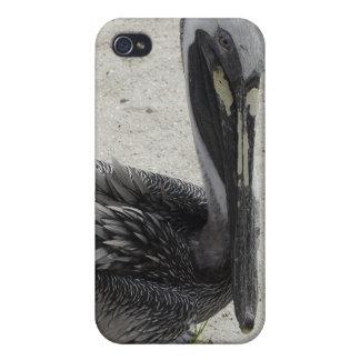 El pelícano solo iPhone 4 protectores