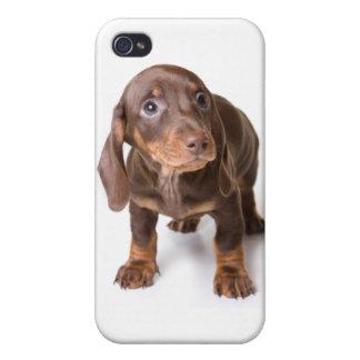 El perrito a solas DT#4055994 observa la cubierta  iPhone 4 Coberturas