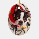 El perro de Boston Terrier en el centelleo enciend Ornato