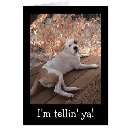 El perro irresistible del pórtico consigue la tarjeta de felicitación