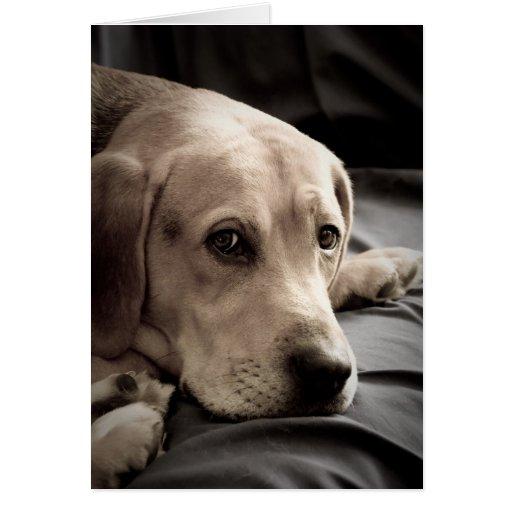 El perro triste que le falta carda tarjeton