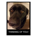 El perro triste que piensa en usted carda tarjetas