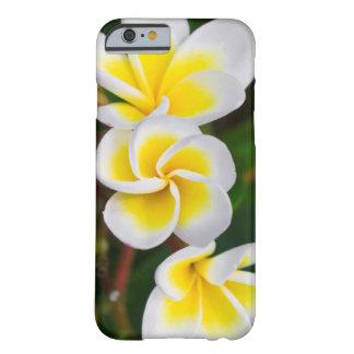 El Plumeria florece el primer, Hawaii Funda Barely There iPhone 6