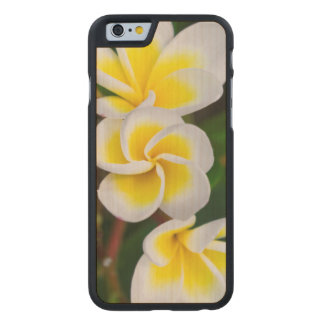 El Plumeria florece el primer, Hawaii Funda De iPhone 6 Carved® De Arce