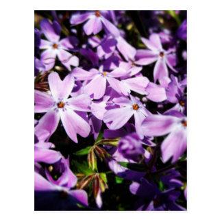 El remiendo púrpura de la flor postal