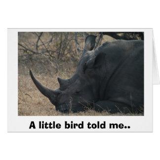 El rinoceronte blanco consigue el consejo de un tarjeta
