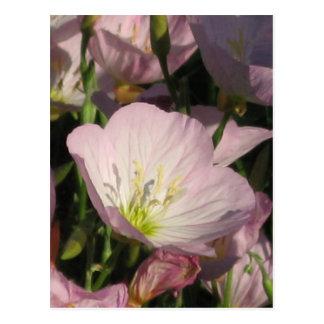 El rosa bonito florece la postal