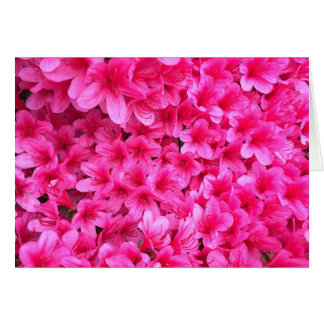 El rosa bonito florece la tarjeta en blanco