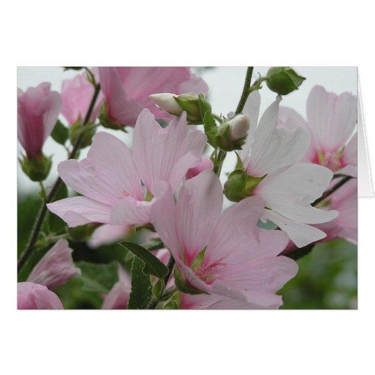 El rosa florece a la familia de Impatiens Tarjeta De Felicitación