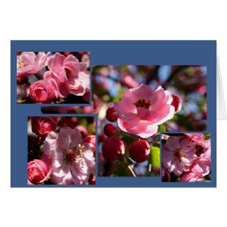 El rosa florece cualquier tarjeta de felicitación