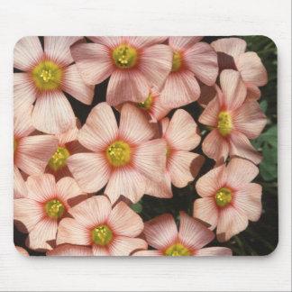El rosa florece el alazán de madera, Oxalis Alfombrilla De Ratón