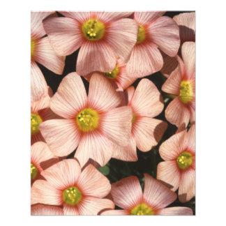 El rosa florece el alazán de madera, Oxalis Flyer A Todo Color