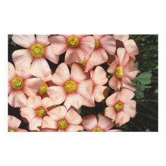 El rosa florece el alazán de madera, Oxalis Tarjeta Publicitaria
