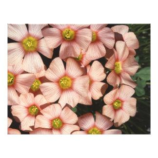 El rosa florece el alazán de madera, Oxalis Tarjeton