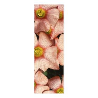 El rosa florece el alazán de madera, Oxalis Tarjetas De Visita Mini