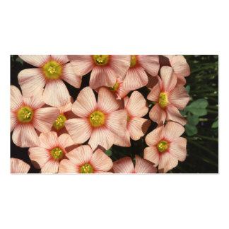 El rosa florece el alazán de madera, Oxalis Plantillas De Tarjeta De Negocio