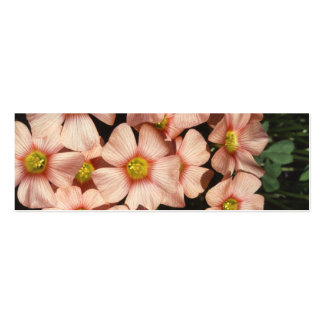 El rosa florece el alazán de madera, Oxalis Tarjetas De Visita