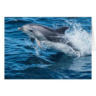 El salpicar del delfín tarjeton