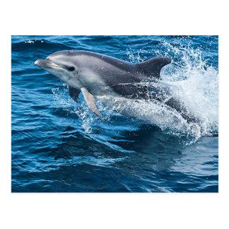 El salpicar del delfín tarjetas postales