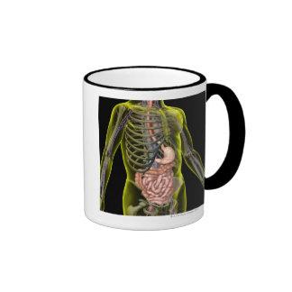 El sistema digestivo taza de dos colores