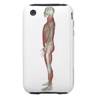 El sistema musculoesquelético 6 iPhone 3 tough protectores