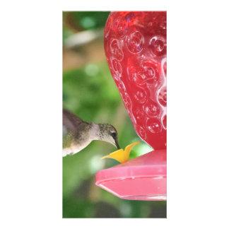 El sorber del colibrí