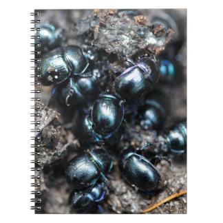 El stercorosus de Anoplotrupes de los escarabajos Cuaderno