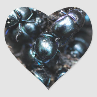El stercorosus de Anoplotrupes de los escarabajos Pegatina En Forma De Corazón