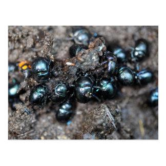 El stercorosus de Anoplotrupes de los escarabajos Postal