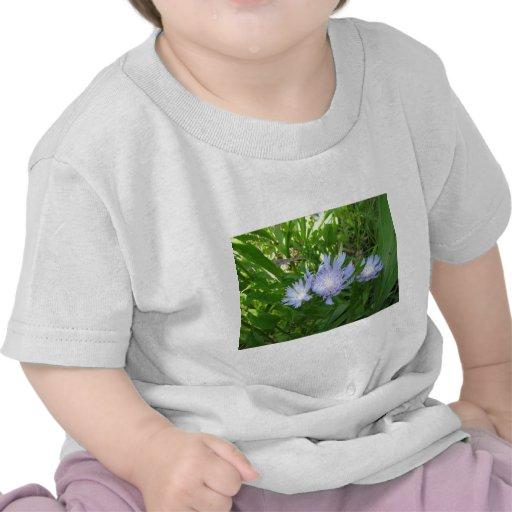El Stokesia, alimenta el aster Camisetas