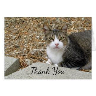 El Tabby feliz le agradece tarjeta de nota