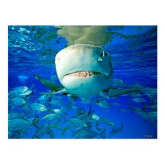 """El tiburón de limón """"dice el queso """" postal"""