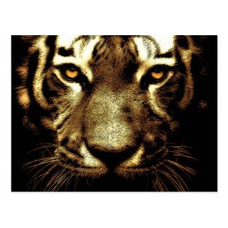 El tigre observa la postal