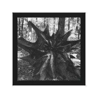 El tocón de árbol arraiga la foto blanco y negro impresión en lienzo