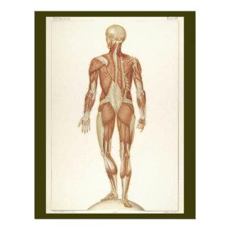 El trasero Muscles el aviador Folleto 21,6 X 28 Cm