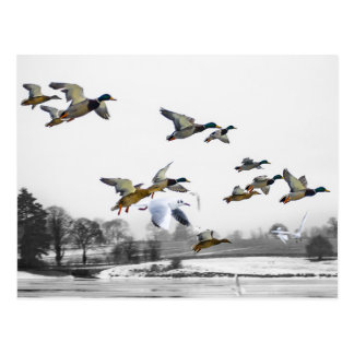 El volar de los patos postal