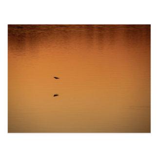 El volar en la puesta del sol postal